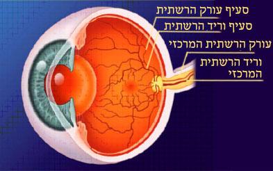 כלי הדם ברשתית העין